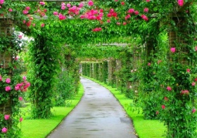 beautiful-garden